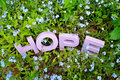 HOPE And Forget-Me-Nots Royalty Free Stock Photography - 75732367