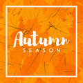 Autumn New Season Of Sales And Discounts, Deals And Offer.  Stock Photos - 75774933