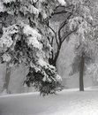 Winter Scene Royalty Free Stock Image - 7580726