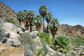 49 Palms Oasis In Joshua Tree National Park Stock Images - 75807124