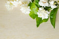 Jasmine Flowers Grouped On Wooden Board Background Royalty Free Stock Image - 75856896