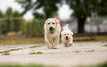 Two Dogs Playing Royalty Free Stock Image - 75875716