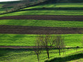 Cultivated Land With Fruit Trees Royalty Free Stock Image - 7592536