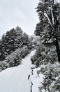 A Snowy Road Surrounded By A Snowy Forest Stock Image - 75912271