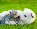 White Swiss Shepherd`s Puppy Playing With Tiny Kitten On Green Grass Royalty Free Stock Photos - 75934448