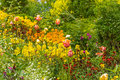 Mixed Flowers In The Garden Royalty Free Stock Photography - 75978077