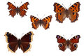 Butterflies Royalty Free Stock Image - 7606226