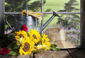 Sunflowers And Watering Can Window View Royalty Free Stock Photos - 76028328