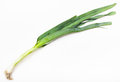 Stalk Of Fresh Green Leek Onion On White Royalty Free Stock Image - 76055536