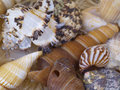 Snail Shells Royalty Free Stock Photo - 7619445