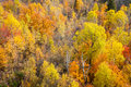 Autumn Forest Royalty Free Stock Images - 76111469
