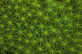 Moss Background Royalty Free Stock Photography - 76144027