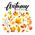 Color Autumn Leaves On White Background. Fall Leaf Set. Vector Illustration Stock Photography - 76157172