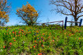 A Meadow With Round Hay Bales And Fresh Texas Wildflowers Royalty Free Stock Photos - 76215448