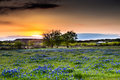 Abandonded Old House In Texas Wildflowers. Royalty Free Stock Photography - 76215727