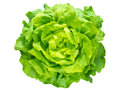 Green Lettuce Salad Head Stock Image - 76258981