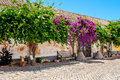 Flowers On The Wall, Faro Portugal Stock Photo - 76260900