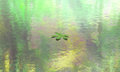 Leaf Floating Calm Water Scene Background Stock Images - 76286384