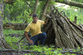 A-frame Survival Shelter In Wooded Forest Stock Image - 76311151