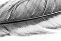 Colorful Hen Feather With Details Stock Images - 76376754