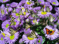 Butterflies Royalty Free Stock Images - 7649449