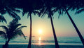 Sunset And Silhouette Of Palm Trees On The Beach. Nature. Royalty Free Stock Photos - 76402808