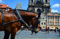Horses Against The Church Of Our Lady Before Tyn Stock Images - 76412404