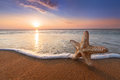 Starfish And The Rising Sun Royalty Free Stock Images - 76418699