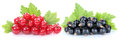 Red And Black Currant Currants Berries Fruits Fruit Isolated Stock Images - 76424554