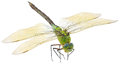 Dragonfly Over White Royalty Free Stock Images - 76448899