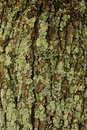 Lichen On A Tree Royalty Free Stock Photos - 76452698