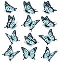 Collection Of Blue Butterflies, Flying In Different Directions Royalty Free Stock Image - 76491996