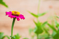Red Flowers In The Morning. Royalty Free Stock Photography - 76494157