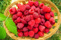 Raspberries Royalty Free Stock Photos - 76499298
