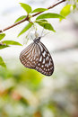 Butterfly Royalty Free Stock Photography - 7662067