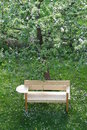 New Bench Under An Apple Tree In Spring Stock Photo - 7668210