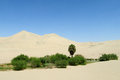 Sand Desert Dunes And Green Oasis With Bushes And Palm Tree Royalty Free Stock Images - 76628189