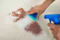 Man Cleaning Stain On Carpet With Sponge Stock Photos - 76661493