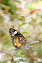 Butterfly Royalty Free Stock Photo - 7675495