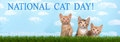 Three Kittens In Tall Grass With Blue Sky Background White Fluff Stock Photo - 76705660
