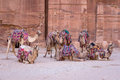 Camels In Ancient City Of Petra In Jordan Stock Photo - 76737780