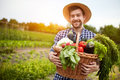 Man Holding Basket With Organic Vegetables Royalty Free Stock Photography - 76739247