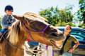 Laughing Horse Stock Photos - 76755403