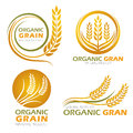 Gold Circle Paddy Rice Organic Grain Products And Healthy Food Banner Sign Vector Set Design Royalty Free Stock Photo - 76780335