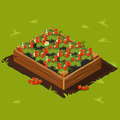 Berries Garden Wooden Box With Strawberry. Set 14 Royalty Free Stock Images - 76784219