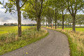 Tree Lane Along An Old Curved Country Road Royalty Free Stock Photos - 76815808