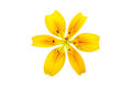 Yellow Lily Isolated Stock Photo - 76836140