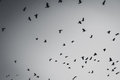 Flying Birds Silhouette Stock Images - 76851764