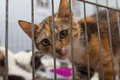 Red Kitten In A Cage Arrives At The Shelter Stock Images - 76855744
