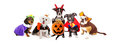 Five Dogs Wearing Halloween Costumes Banner Royalty Free Stock Photo - 76863225